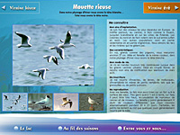 internet web agence - Faune des bords du lac du Bourget